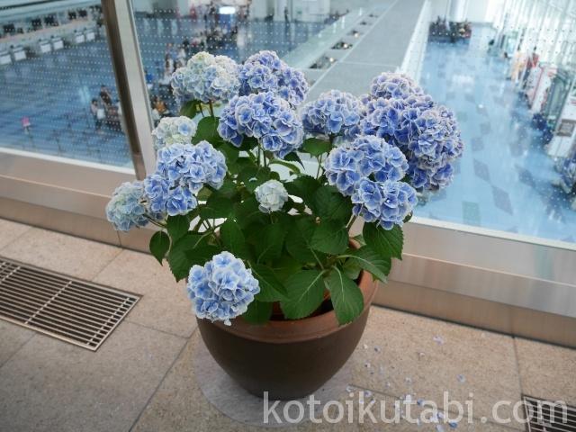 羽田空港国際ターミナルあじさい3