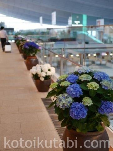 羽田空港国際ターミナルあじさい