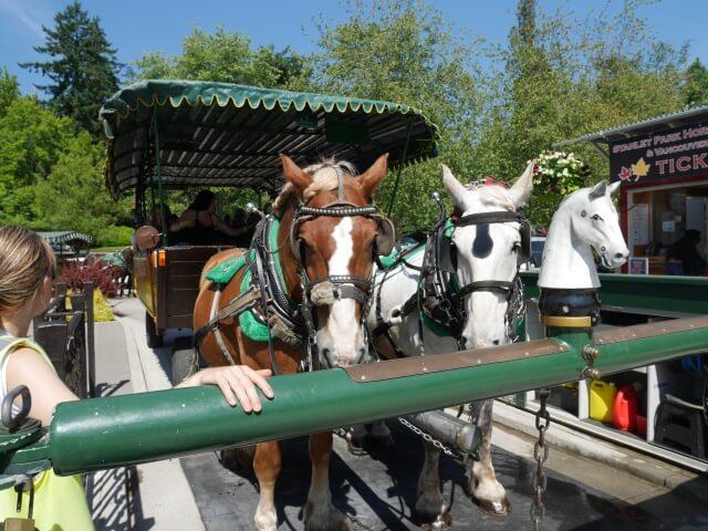 スタンレーパークの馬車ツアーの馬