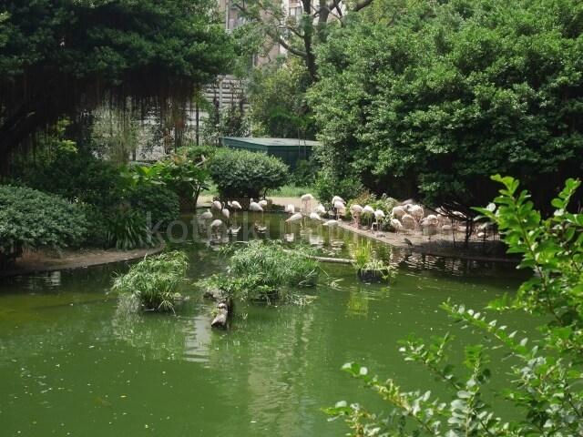 九龍公園のフラミンゴ