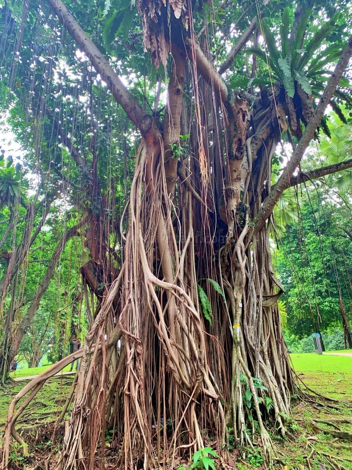 KLCC公園の木
